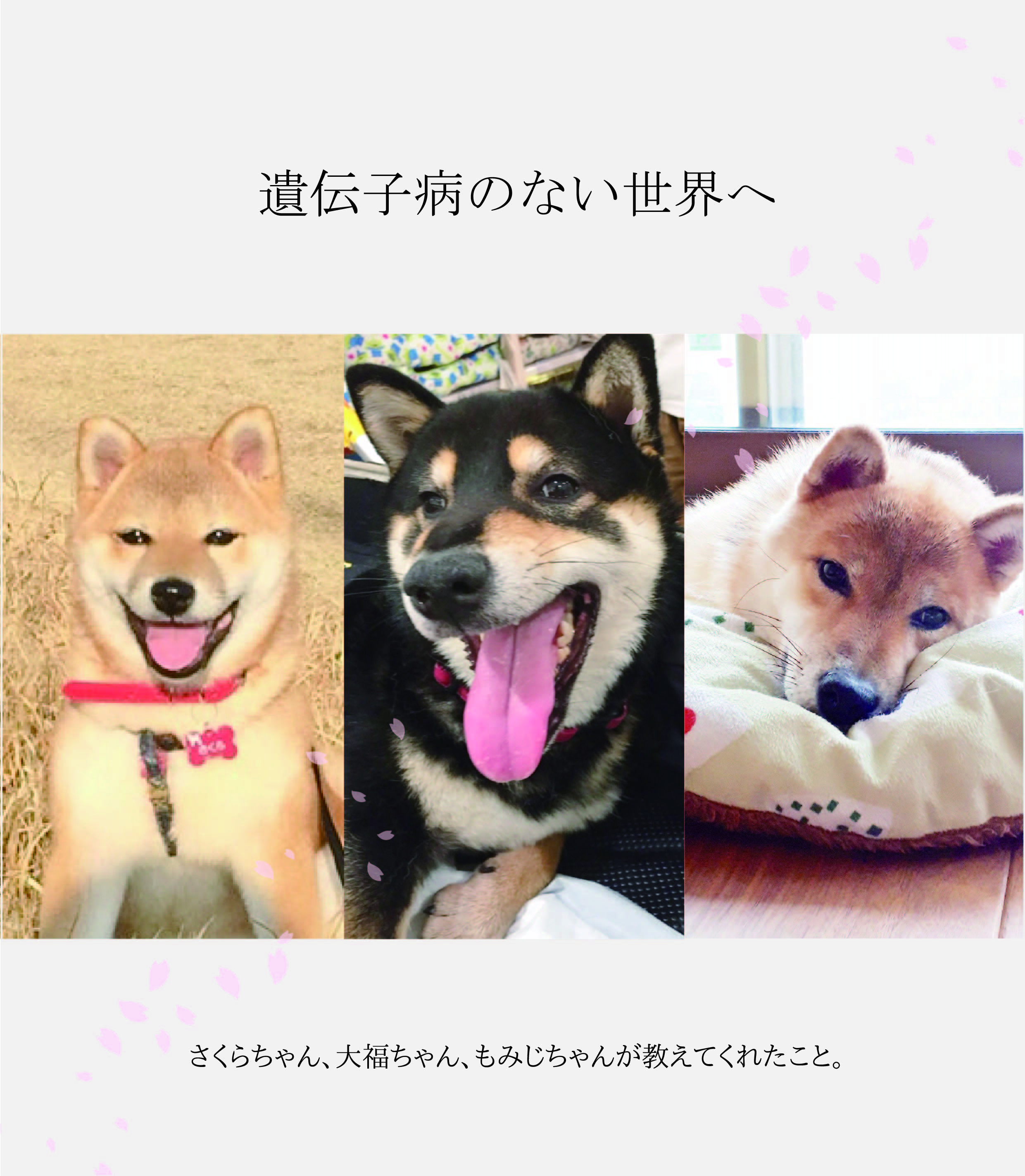 https://www.ahb.jpn.com/images/news/2299/file.jpeg