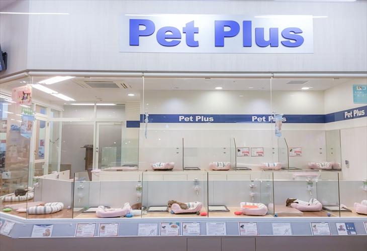 ペットプラス新潟南店 子犬 子猫専門ペットショップの Petplus ペットプラス